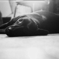The house dog at the Gay Liberation Front-DC communal house
